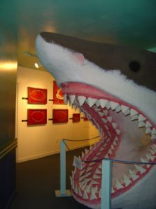 Shark at fossil museum